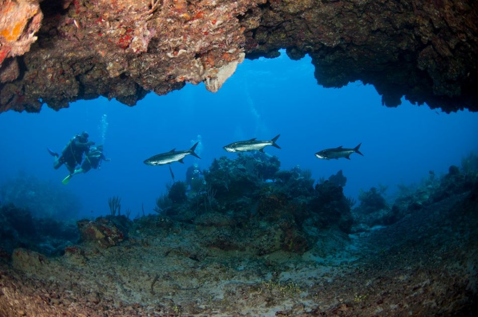 2-Tank Boat Dive in the Cayman Islands - Image 91