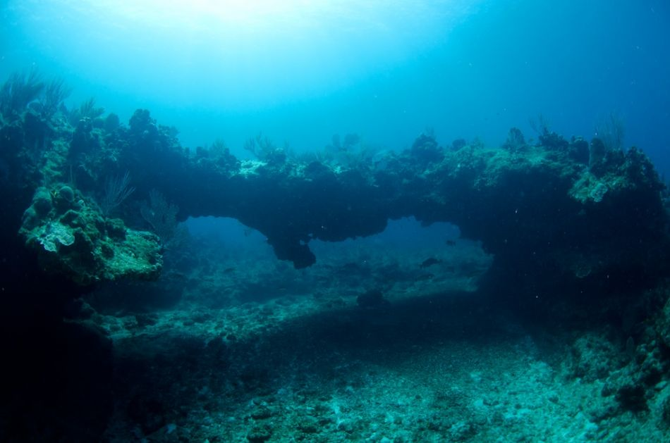 2-Tank Boat Dive in the Cayman Islands - Image 96