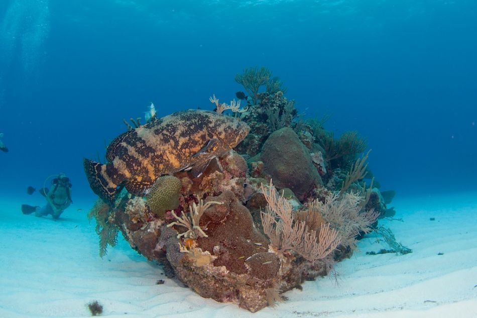 3-Tank Boat Dive in the Cayman Islands - Image 1