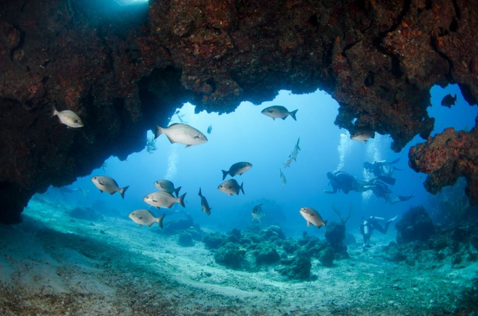Cayman-Cavern-Diving-417