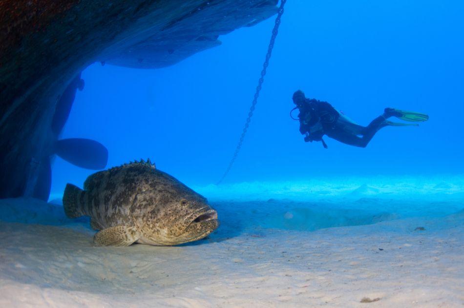Cayman-Kittiwake-Ocean-Frontiers- 2487