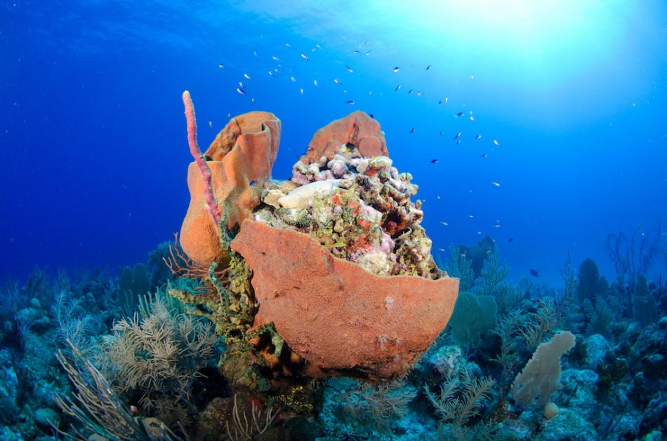Cayman-Reef-Diving-328
