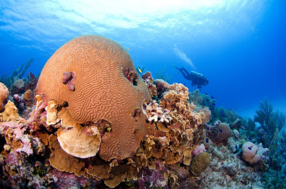 Cayman-Reef-Diving-330