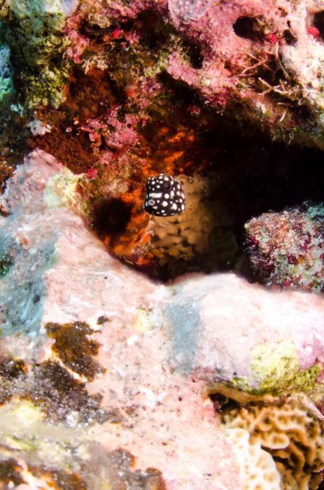 Cayman-Reef-Diving-332