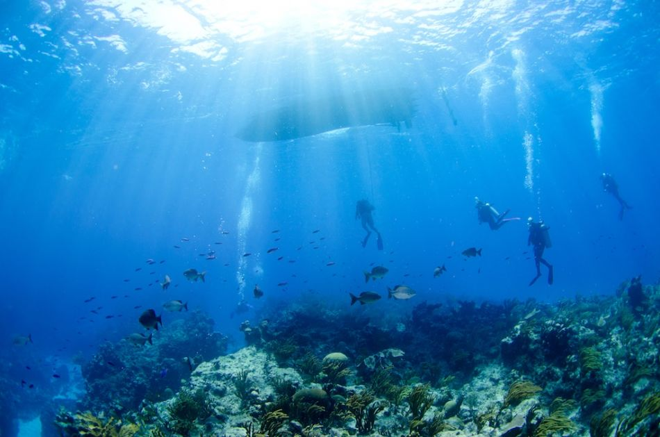 Cayman-Reef-Diving-334