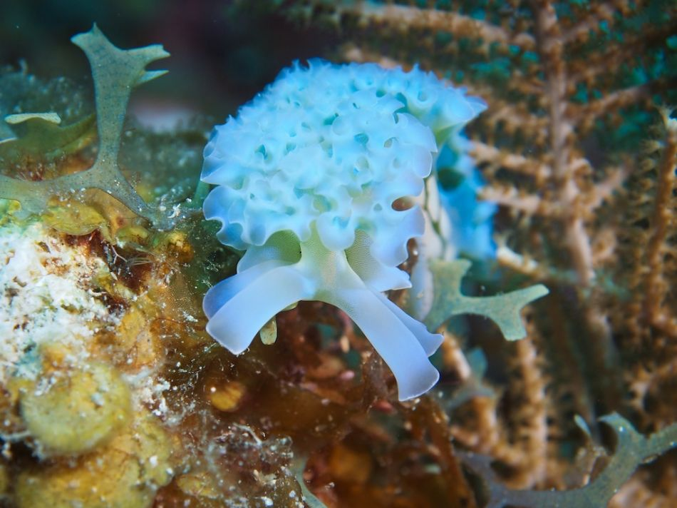 Cayman-Reef-Diving-355