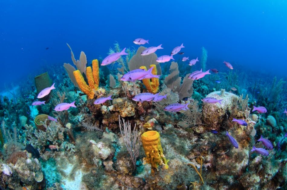 Cayman-Reef-Diving-359