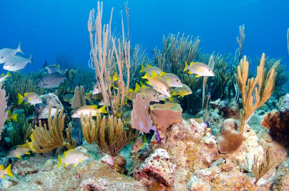 Cayman-Reef-Diving-364