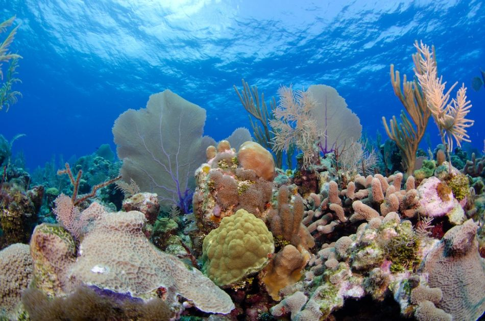 Cayman-Reef-Diving-372