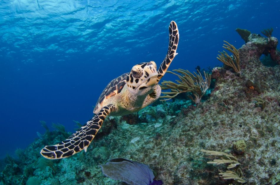 Cayman-Reef-Diving-382
