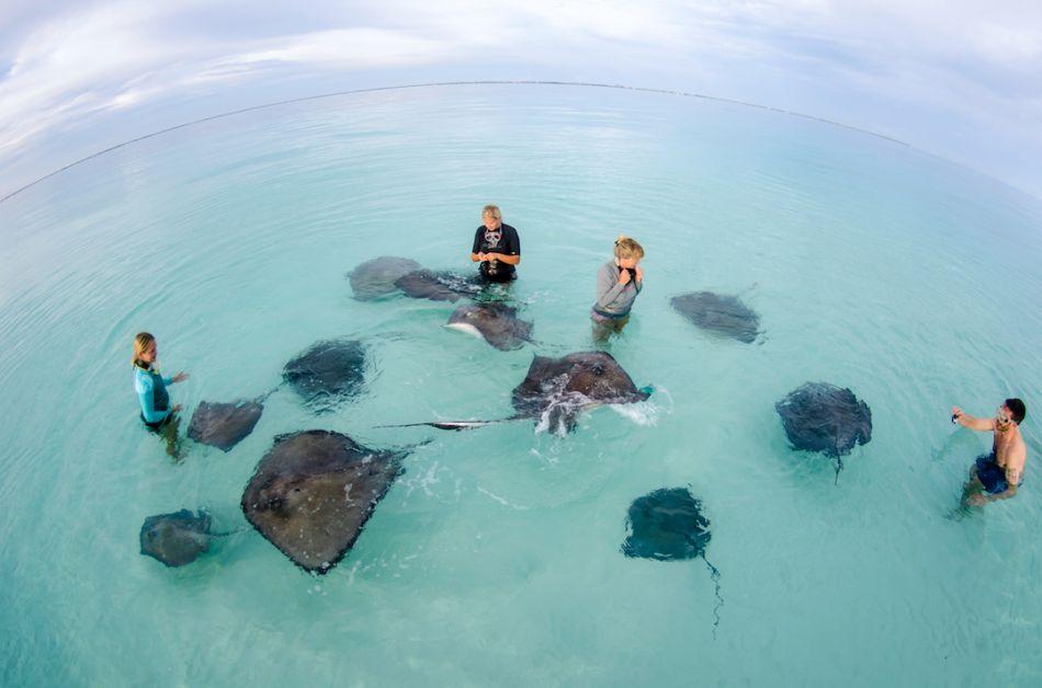 Cayman-Snorkeling-Dawn-Stingrays-Ocean-Frontiers-Gallery-1080x