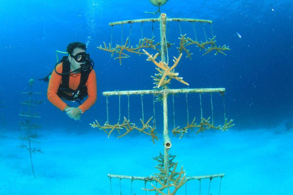 Stephen-Broadbelt-Coral-Tree