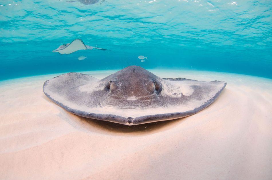 Stingray-Cayman-Sandbar-509
