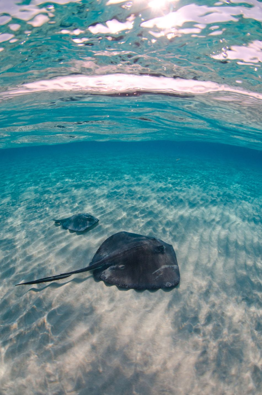 Stingray-Cayman-Sandbar-515