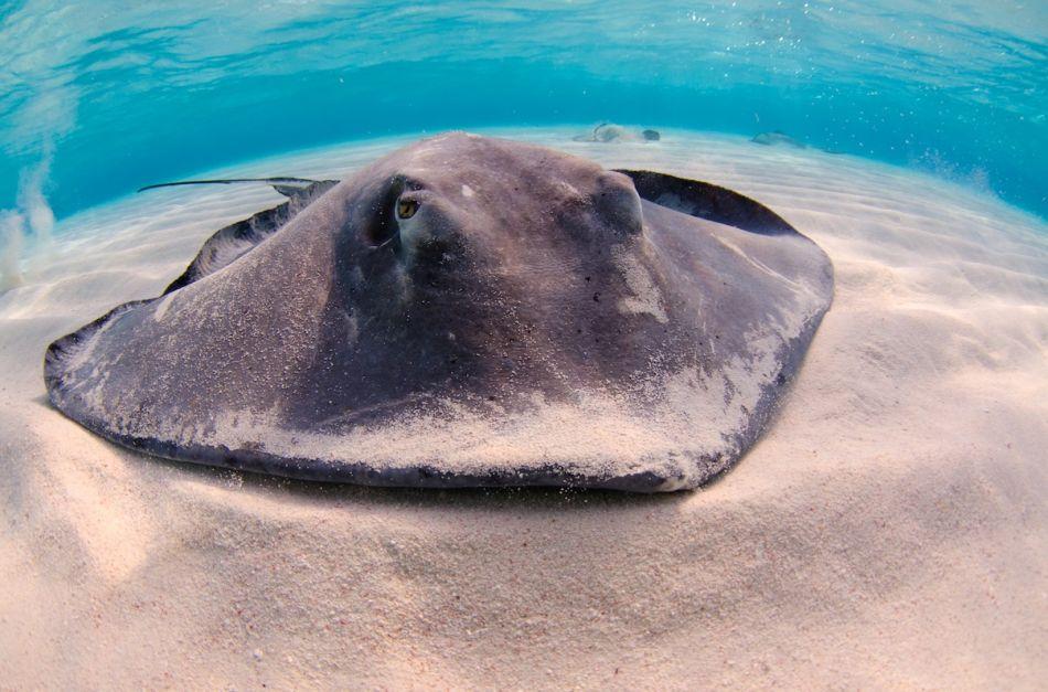 Stingray-Cayman-Sandbar 522 1236x819