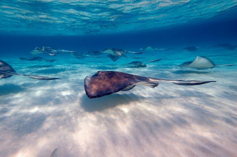 Stingray-City-Cayman-Sandbar-Fly-By-1080x