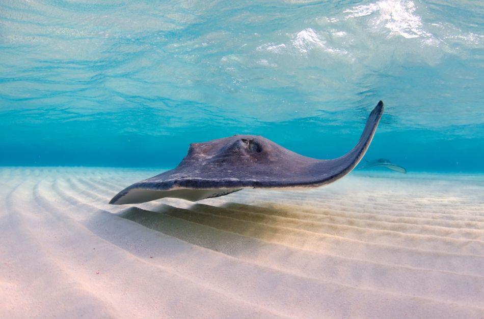 Stingray-City-Cayman-Sandbar-Hello-1080x