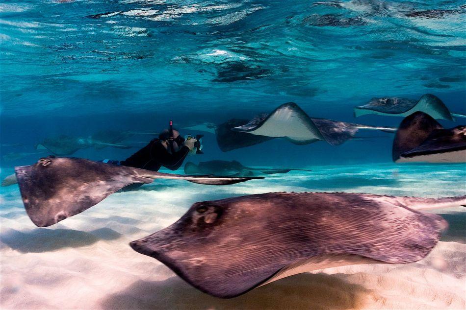 Stingrays-Cayman-Sandbar-535