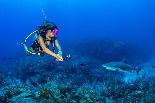 X-Dive-East-End-Shark-Web
