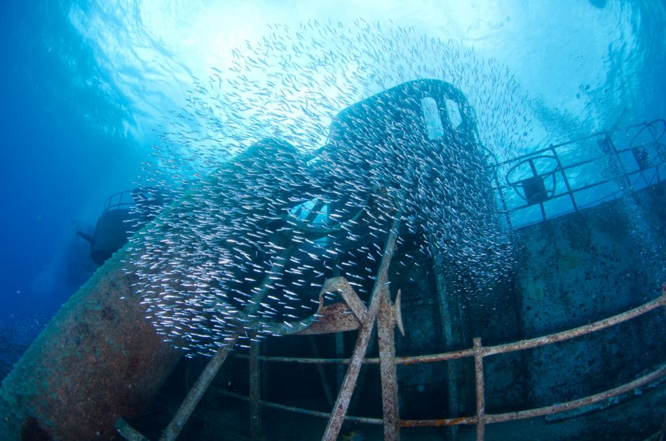 Kittiwake Wreck Diving in Grand Cayman - Image 14