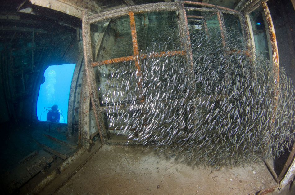 Kittiwake Wreck Diving in Grand Cayman - Image 20