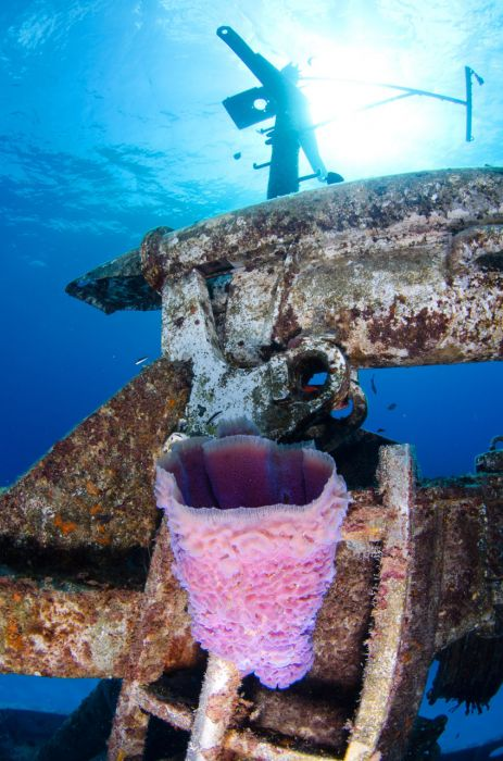 Kittiwake Wreck Diving in Grand Cayman - Image 25