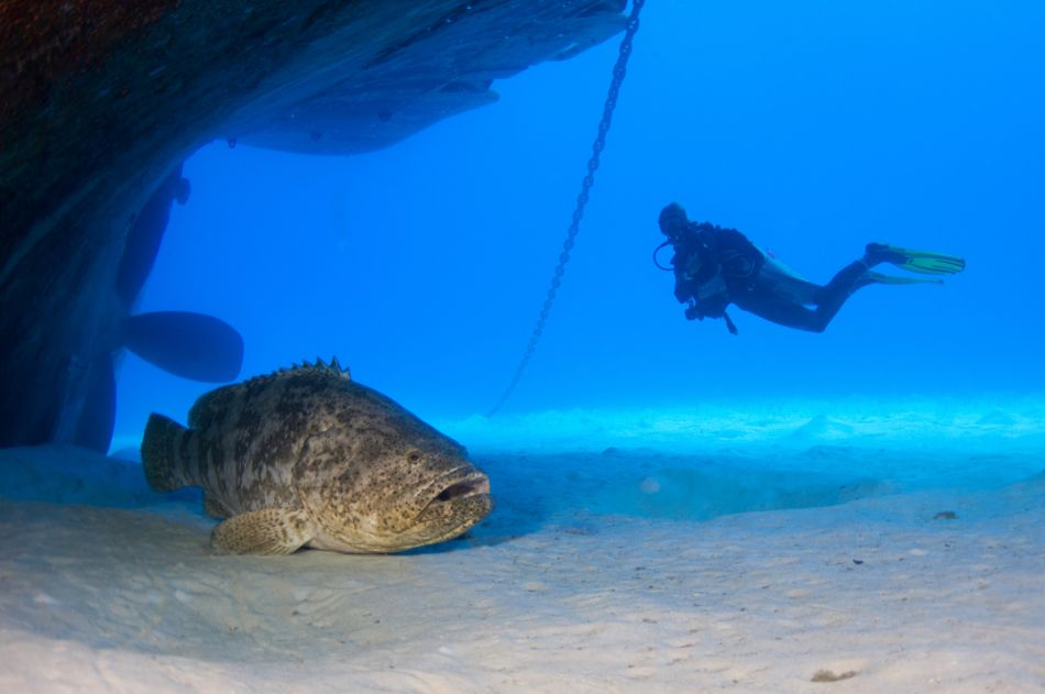 Kittiwake Wreck Diving in Grand Cayman - Image 32