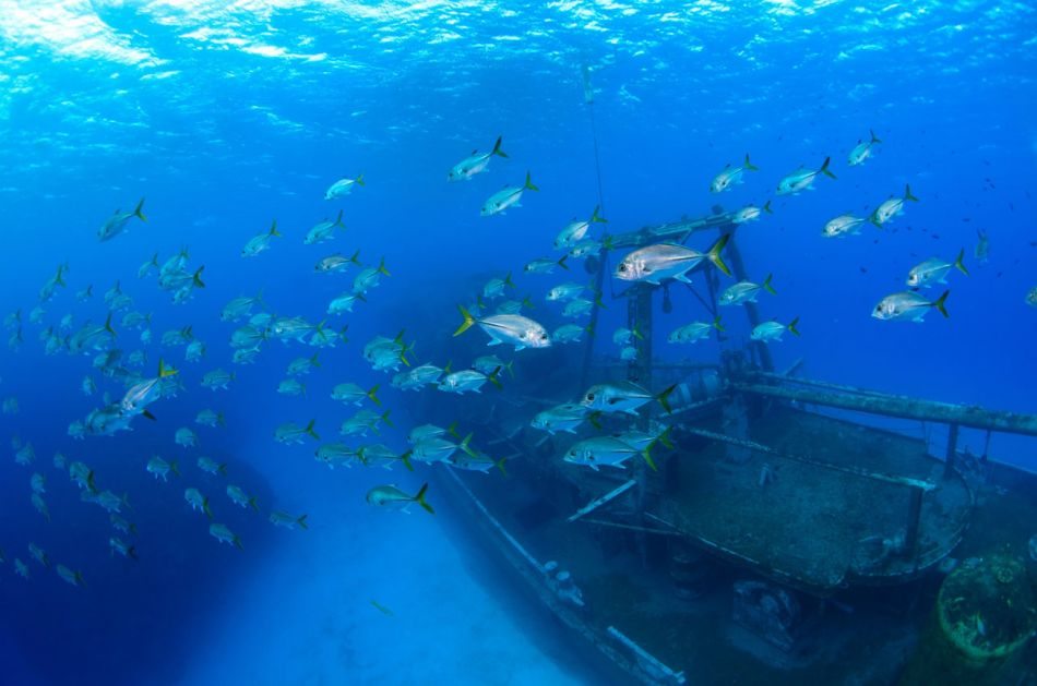 Kittiwake Wreck Diving in Grand Cayman - Image 5