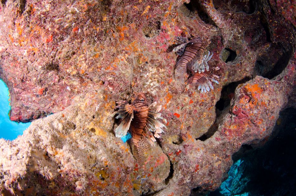 Lionfish Culling in Grand Cayman with Ocean Frontiers - Image 16