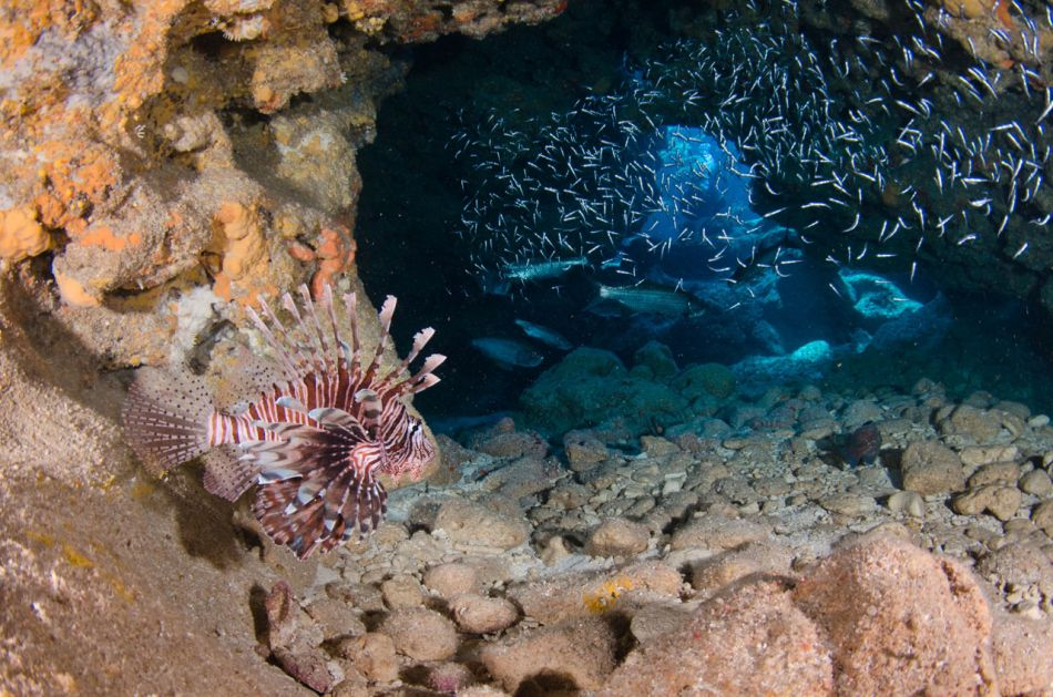 Lionfish Culling in Grand Cayman with Ocean Frontiers - Image 17
