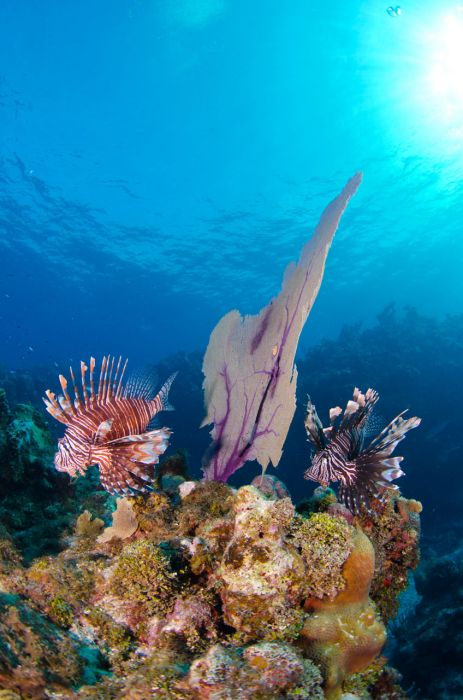 Lionfish Culling in Grand Cayman with Ocean Frontiers - Image 19