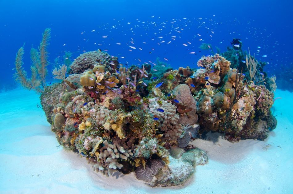 Open Water Referral Certifications in the Cayman Islands
