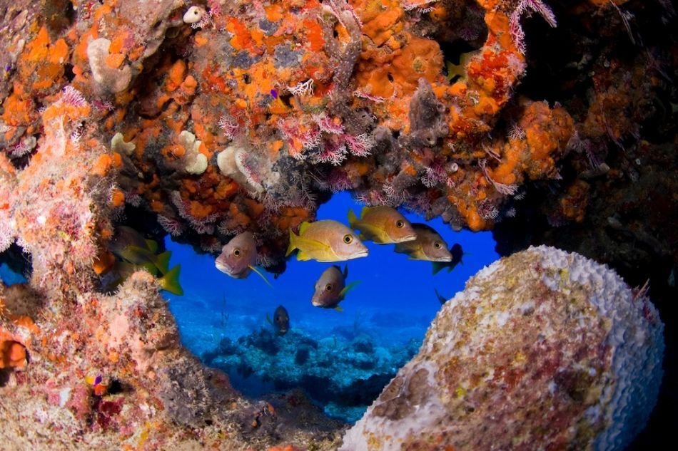 PADI Full Open Water Diver Certification in Grand Cayman