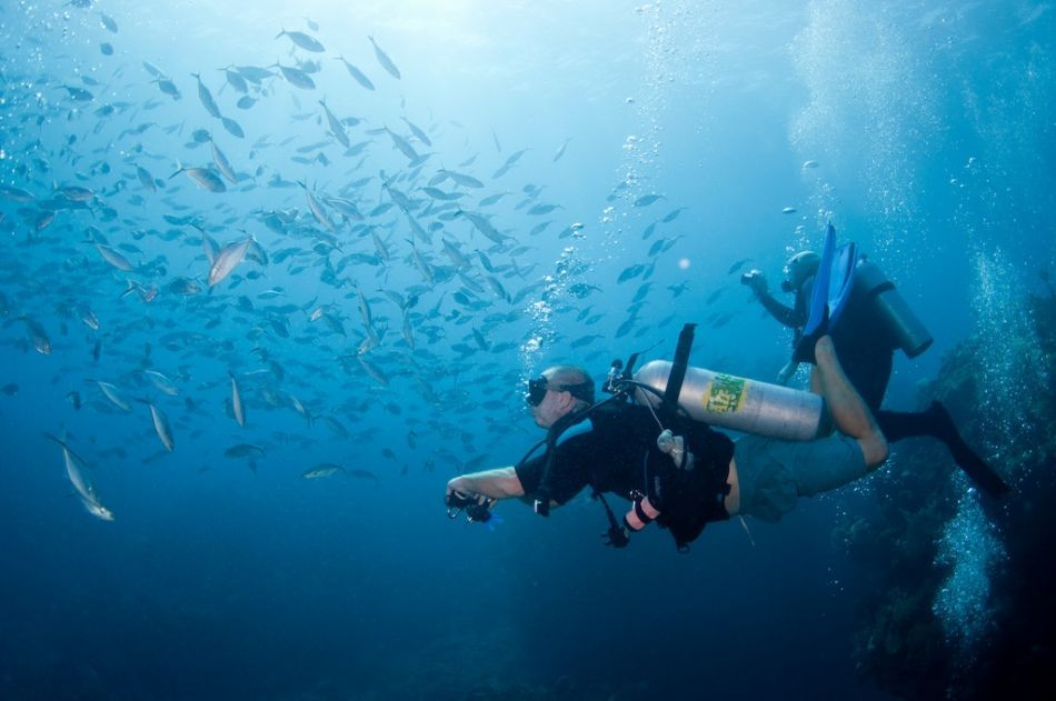 PADI Underwater Photography Certification in Grand Cayman