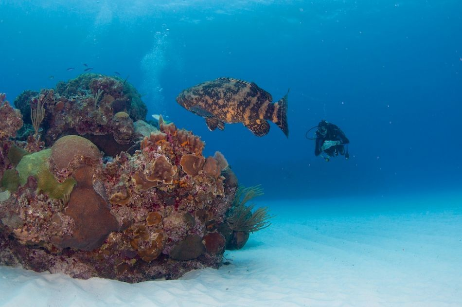 Scuba Diving Packages in Grand Cayman - Image 5