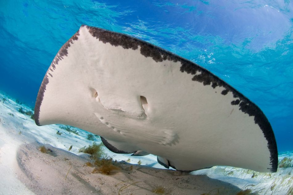 Stingray Snorkel Trips to the Sandbar in Grand Cayman - Image 1