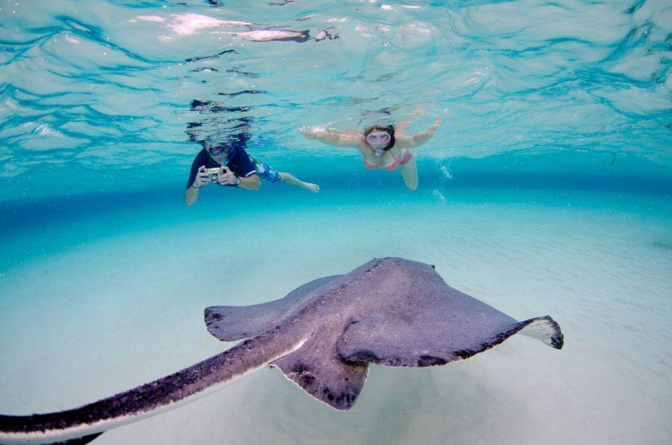 Stingray Snorkel Trips to the Sandbar in Grand Cayman - Image 10