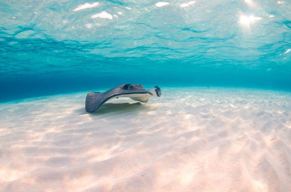 Stingray Snorkel Trips to the Sandbar in Grand Cayman - Image 11