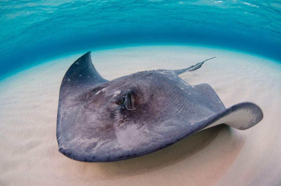 Stingray Snorkel Trips to the Sandbar in Grand Cayman - Image 12