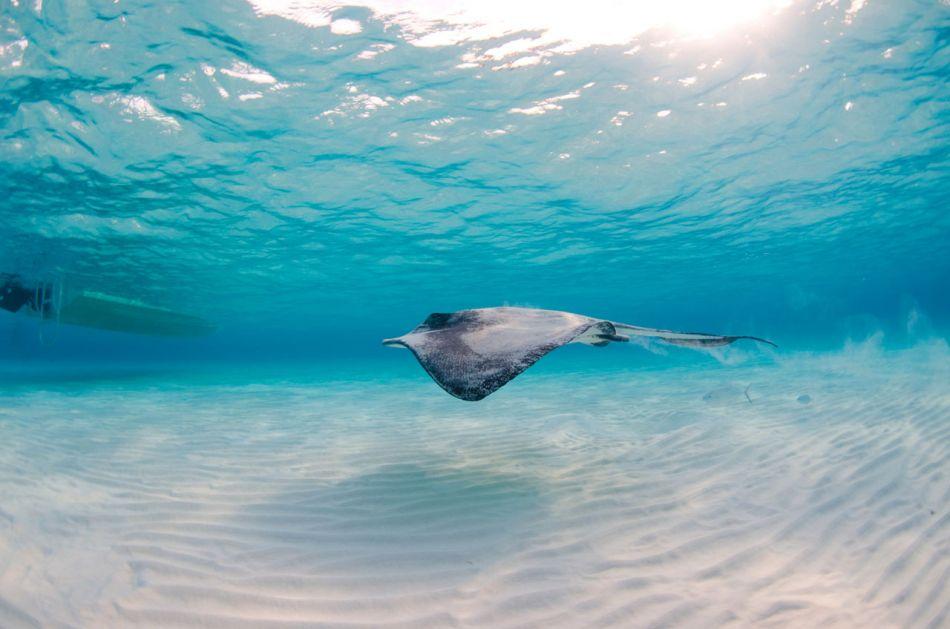 Stingray Snorkel Trips to the Sandbar in Grand Cayman - Image 13