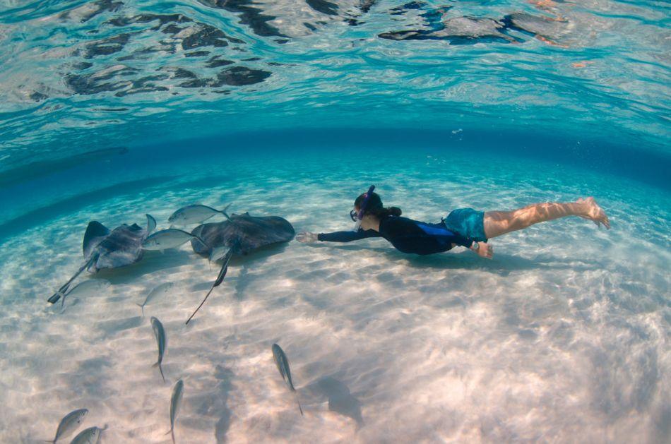 Stingray Snorkel Trips to the Sandbar in Grand Cayman - Image 14