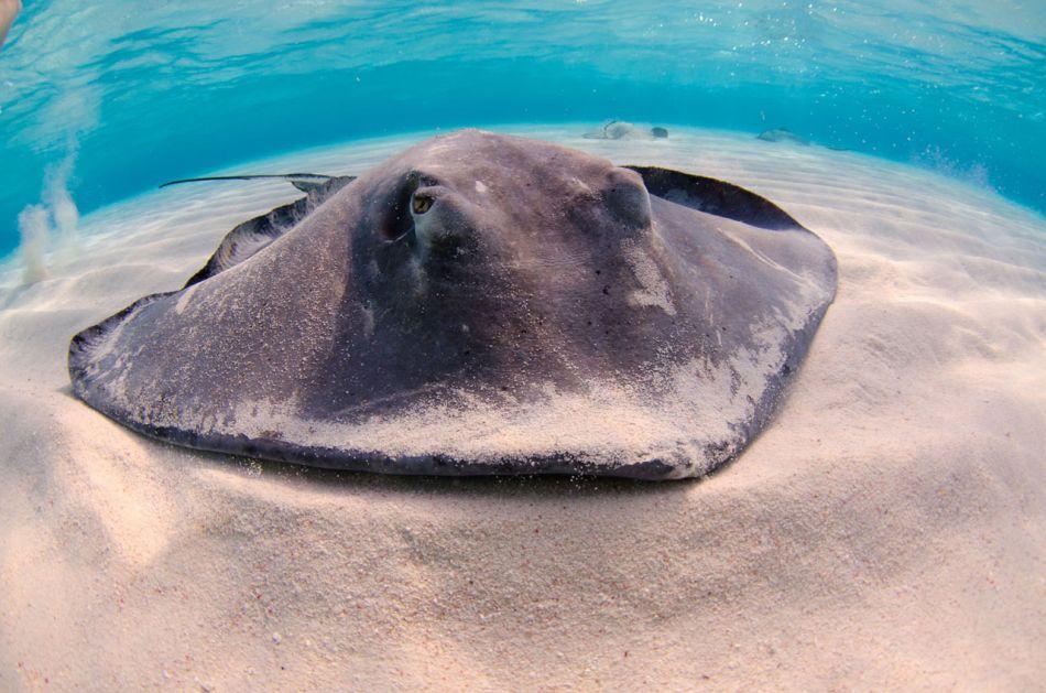 Stingray Snorkel Trips to the Sandbar in Grand Cayman - Image 17