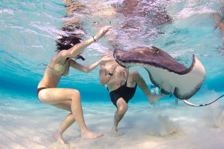 Stingray Snorkel Trips to the Sandbar in Grand Cayman - Image 18