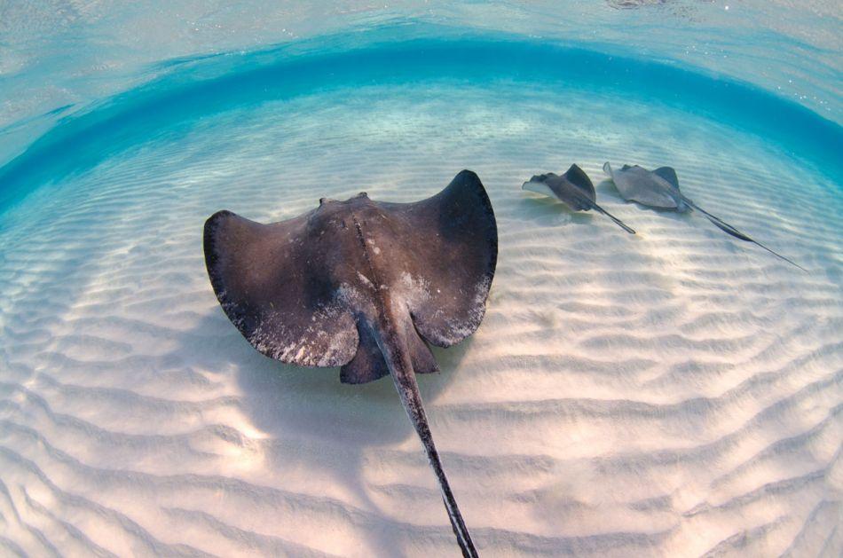 Stingray Snorkel Trips to the Sandbar in Grand Cayman - Image 19