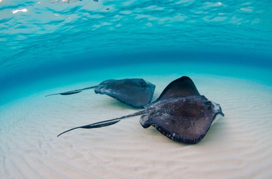 Stingray Snorkel Trips to the Sandbar in Grand Cayman - Image 2