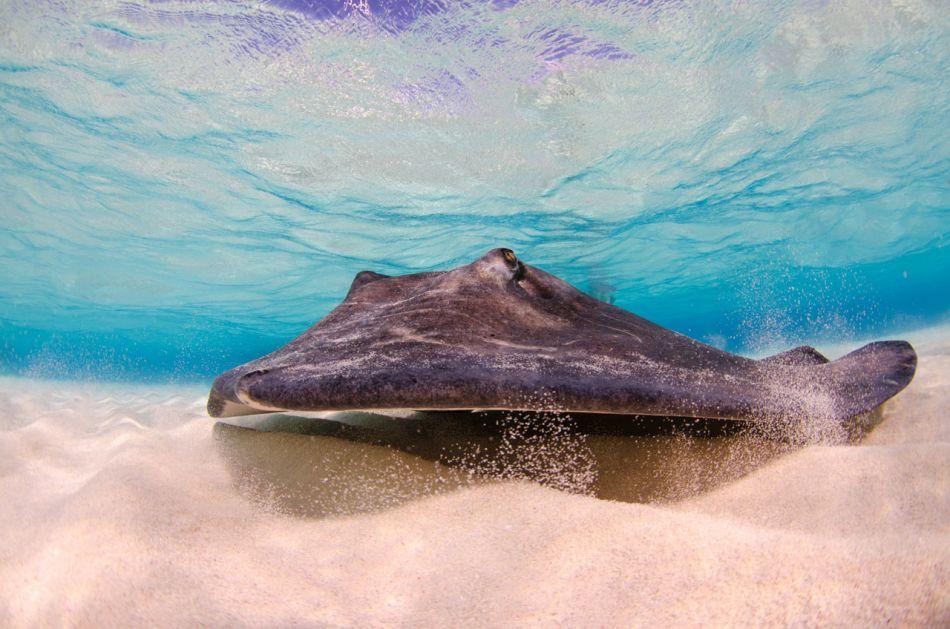 Stingray Snorkel Trips to the Sandbar in Grand Cayman - Image 20