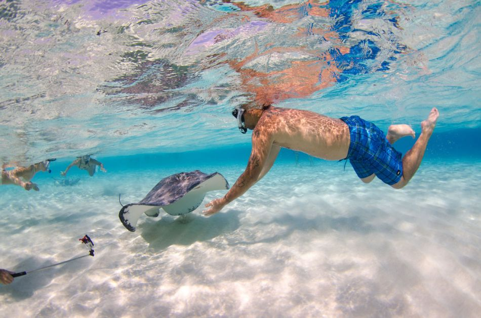 Stingray Snorkel Trips to the Sandbar in Grand Cayman - Image 21