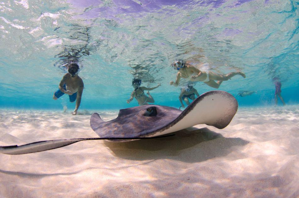 Stingray Snorkel Trips to the Sandbar in Grand Cayman - Image 23