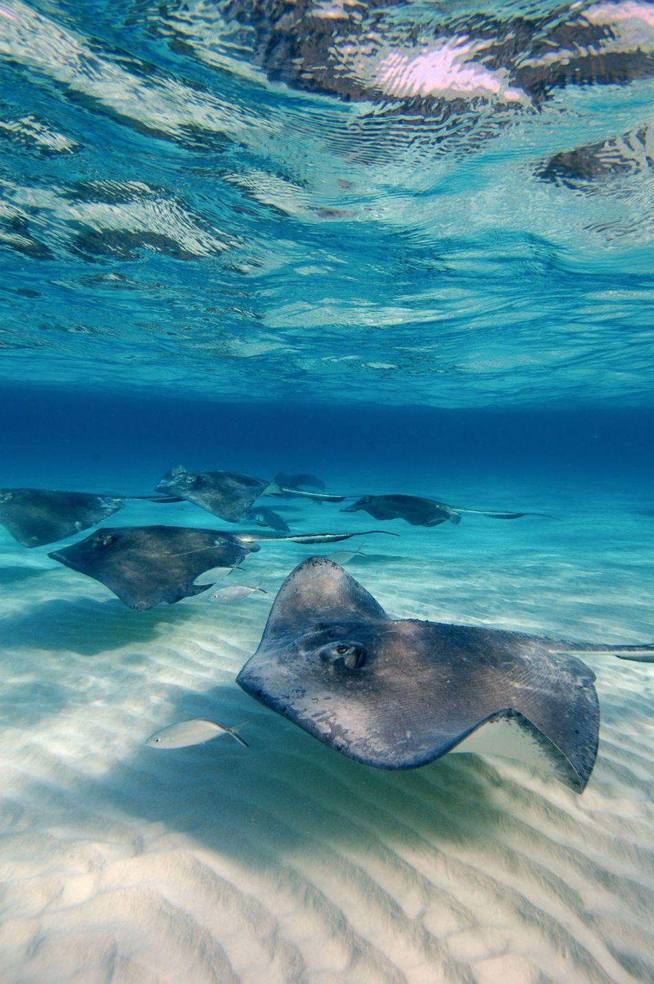 Stingray Snorkel Trips to the Sandbar in Grand Cayman - Image 25