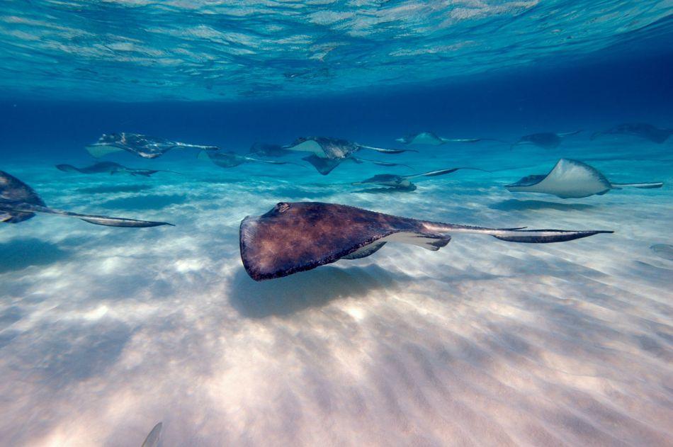 Stingray Snorkel Trips to the Sandbar in Grand Cayman - Image 26